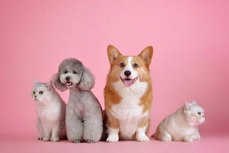 Pet Business, Bukan Sembarang Bisnis>                      </div>                      <div class=